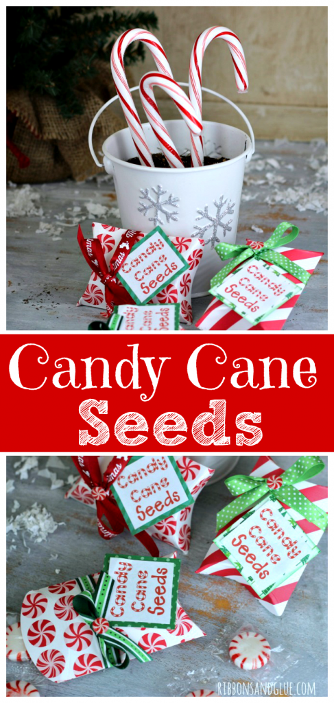 candy-cane-peppermint-seeds